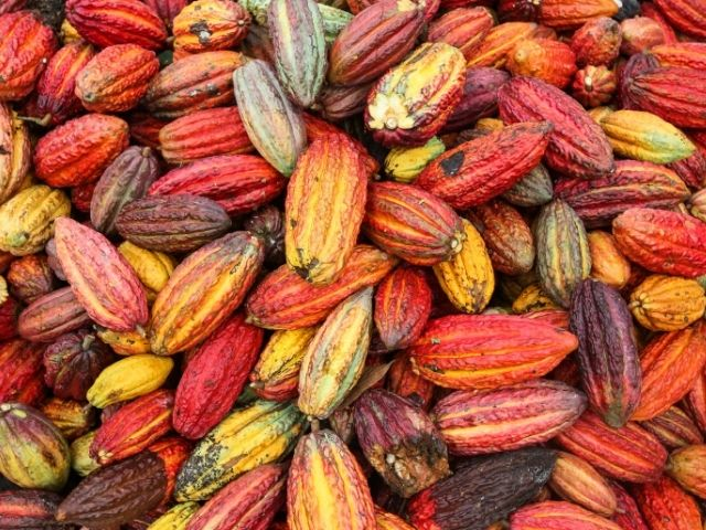 bionanotecnologia cacao